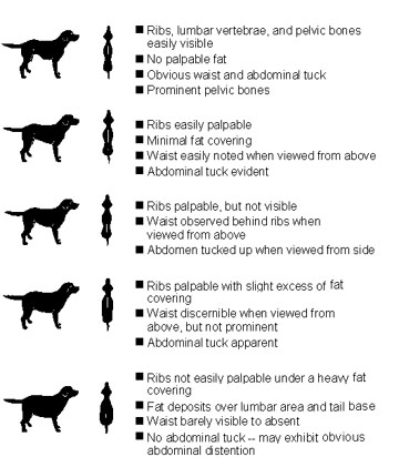 Do I Look Fat in This Fur? (Dog Weight Chart)